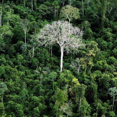 Compre NFTs e ajude à reflorestar o Brasil!